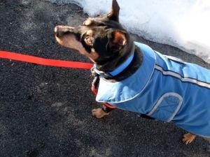 Job in his new coat